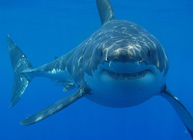 Fewer Sharks Off Ala. Coast, Warning Dropped | Alabama ...