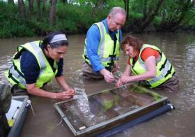 Papoulias and Nicks close the minnow cages with the help of environmental toxicologist Don Tillitt. The biologists will check in on these minnows every other day until the end of July.
