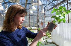 University of Missouri plant scientist Melissa Mitchum inspects a plant for soybean cyst nematode in her greenhouse.