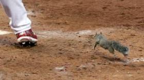 The rally squirrel was seen as good luck for the 2011 St. Louis Cardinals.