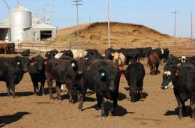 A bioterror attack that introduced a virus like foot-and-mouth disease could devastate the U.S. livestock industry. Regulators are proposing new rules meant to protect the food system from terror attack.