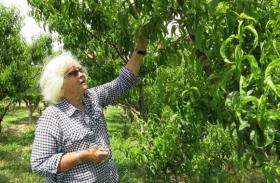 Carol Zadrozny, owner of Z's Orchard in Palisade, Colo., has had trouble securing insurance coverage for her agritourism attractions