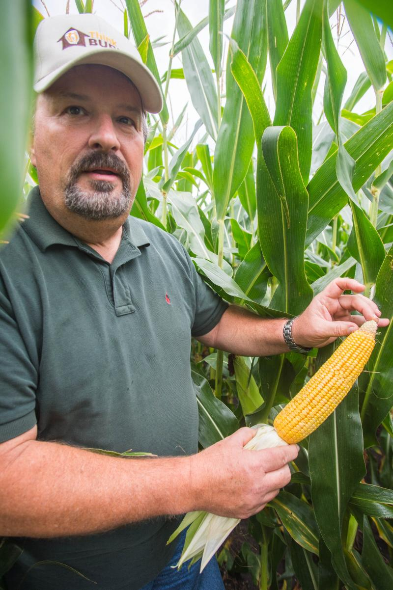 "Livingston County Ill. Farmer Doug Wilson looking at a much improved corn crop this year.  Last year, he says ""nearly half the ear"" would have been empty.  He was one of many corn farmers who received a crop insurance payout for 2012."