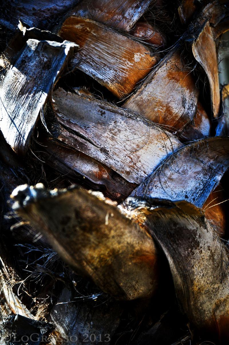 Palm Tree Bark, Botswana