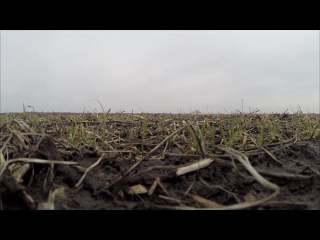 Boucher Farms used a drone to scout winter wheat. The harsh winter left very little green sprouting.