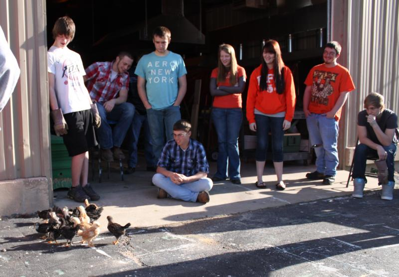 Western students feed baby chicks while studying the effects of protein in chicken growth.