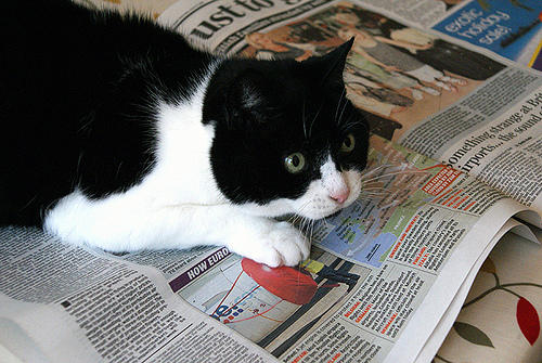 cat on newspaper