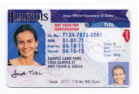 Illinois driver's license