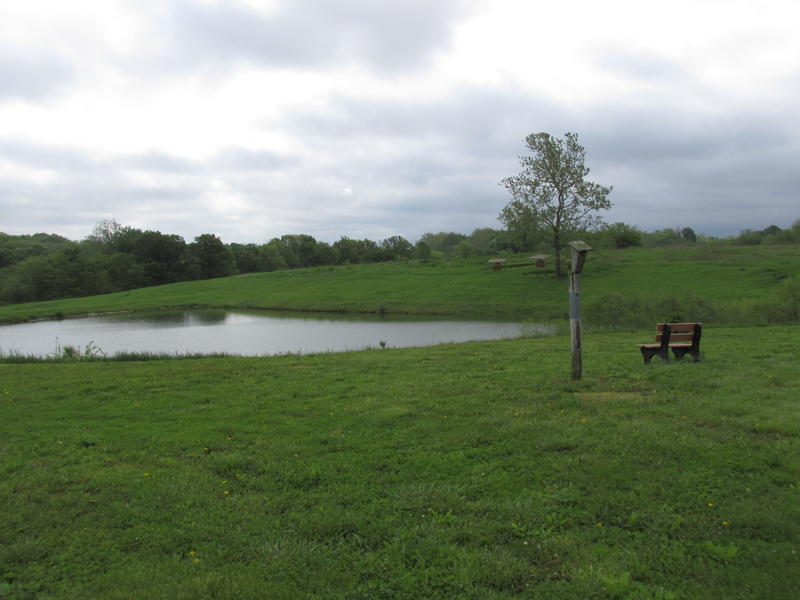 the pond at Jubilee Farm