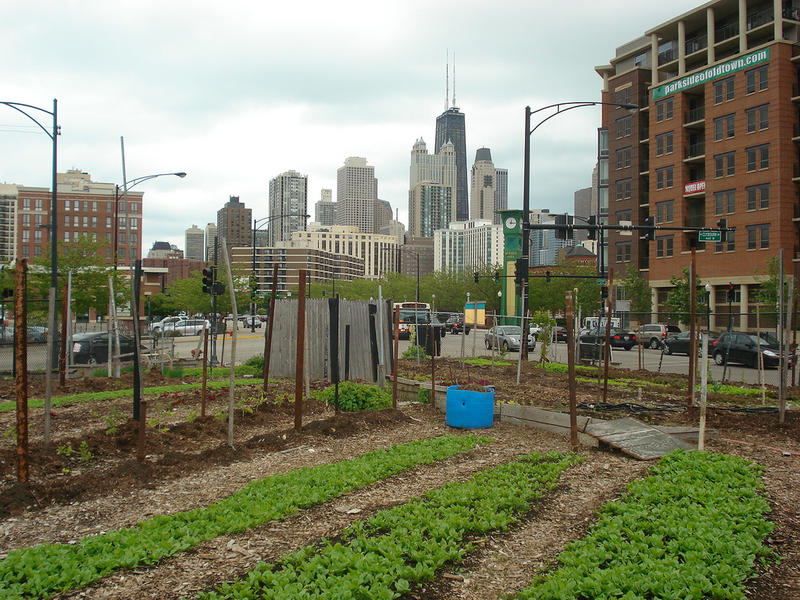 City Farm vegetable garden and the Chicago skyline