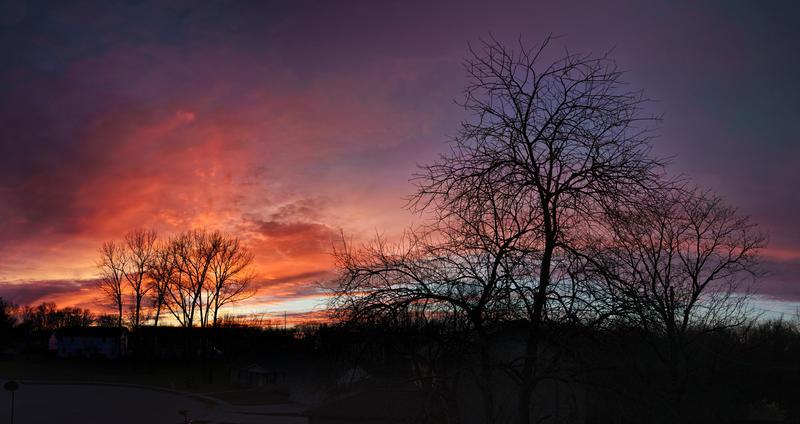 Sunset over tree line