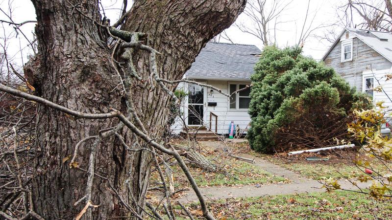 tree felled by tornado