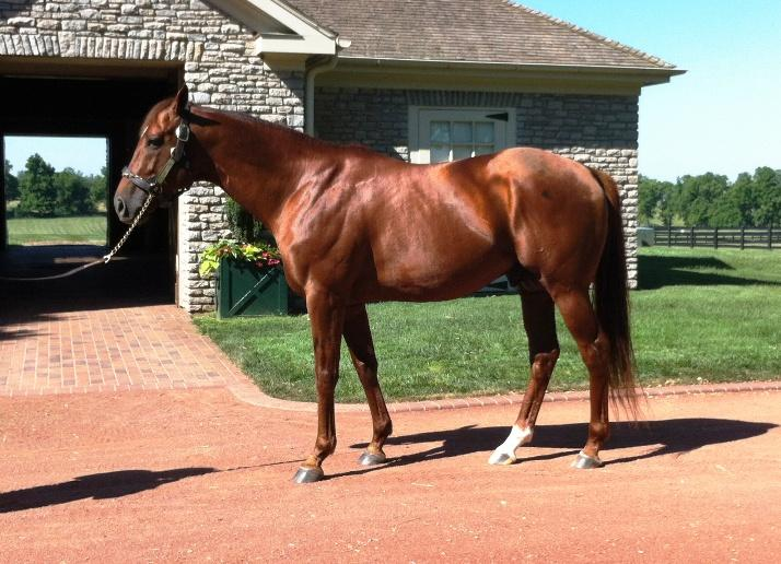 Flower Alley, sire of I'll Have Another