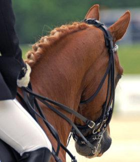 Photo courtesy USEF