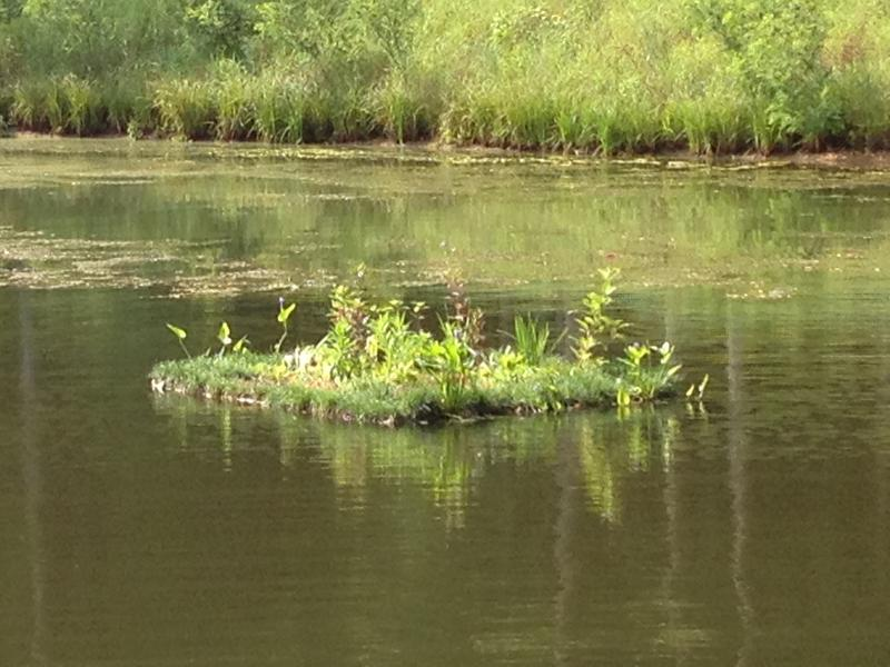 One type of floating wetland. It has been in the storm water pond for several weeks.