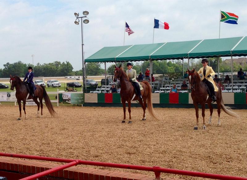 Junior League Horse Show 2014