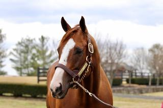 California Chrome is the star attraction on this particular Horse Country Tour