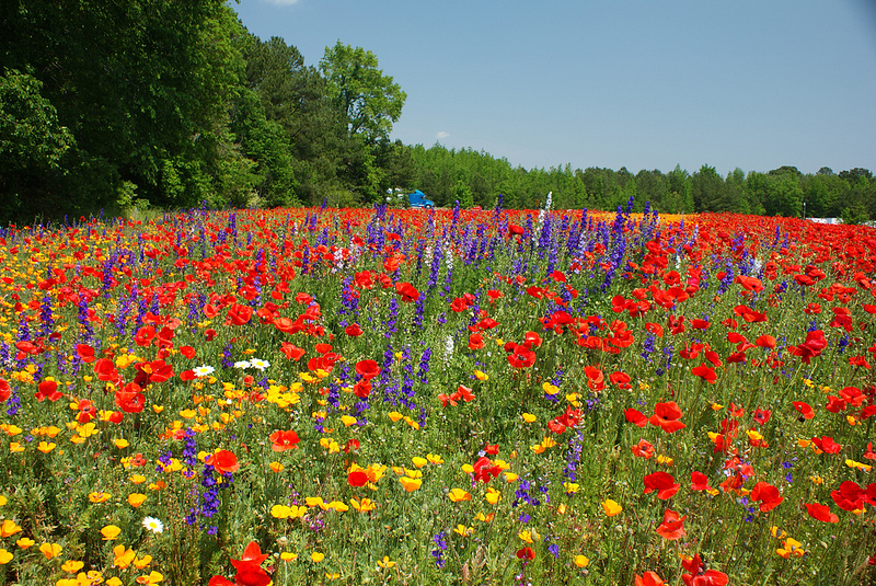 which nc roadside has the best wildflowers?  wunc, Beautiful flower