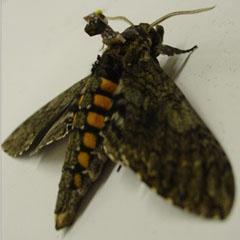 www.insectcyborgs.com