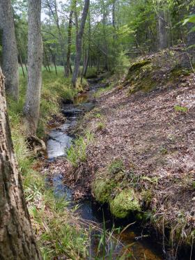Little Pocket Creek on Ed Harris' farm.