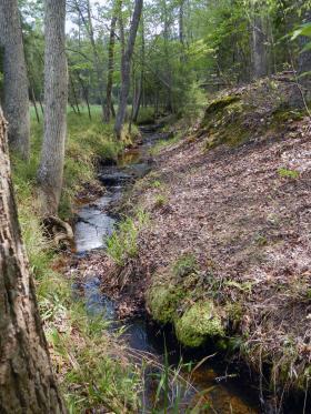 Little Pocket Creek on Ed Harris' farm.