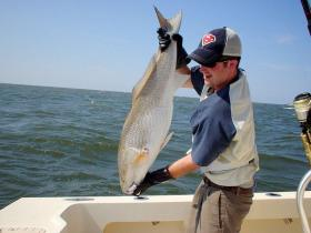 Fisherman catches Red Drum of the NC Coast