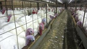 A snapshot from inside the Butterball processing facility in Hoke County,