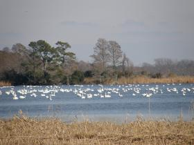 Lake Mattamuskeet National Wildlife Refuge