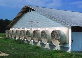 A North Carolina hog house being kept cool by large fans.