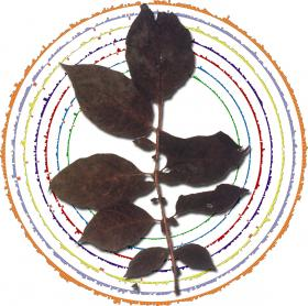 A visualization of the late blight genome.