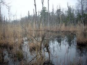 Wetlands in eastern North Carolina.