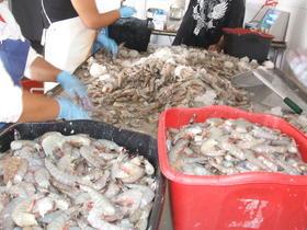 shrimp, North Carolina coast