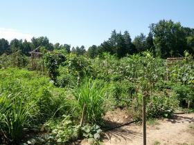 Transplanting Traditions farm in Orange County