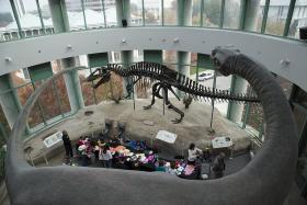 Fossil Fair at the North Carolina Museum of Natural Sciences
