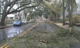 trees down wilmington