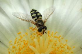 Beyer CropScience Bee