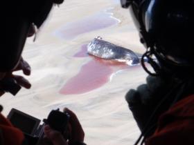 Whale euthanization