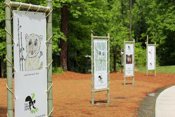 Illustrations by children who've visited the Duke Lemur Center.