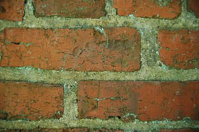 Brick wall At Stagville