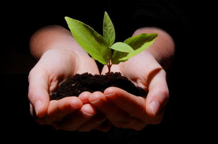 Plant, Sprout, Garden, Soil, Dirt, Hands,