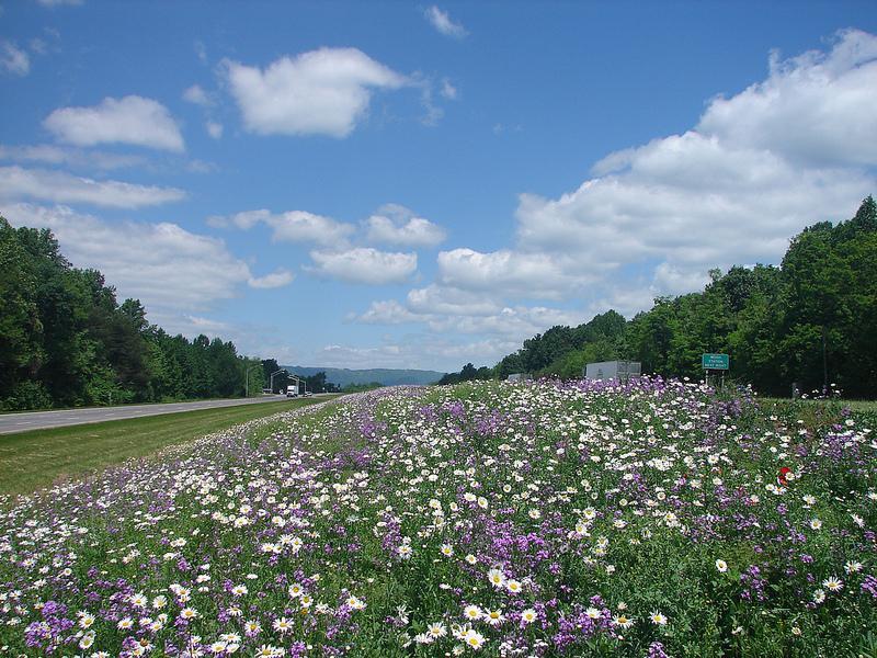 wildflowers, flowers,