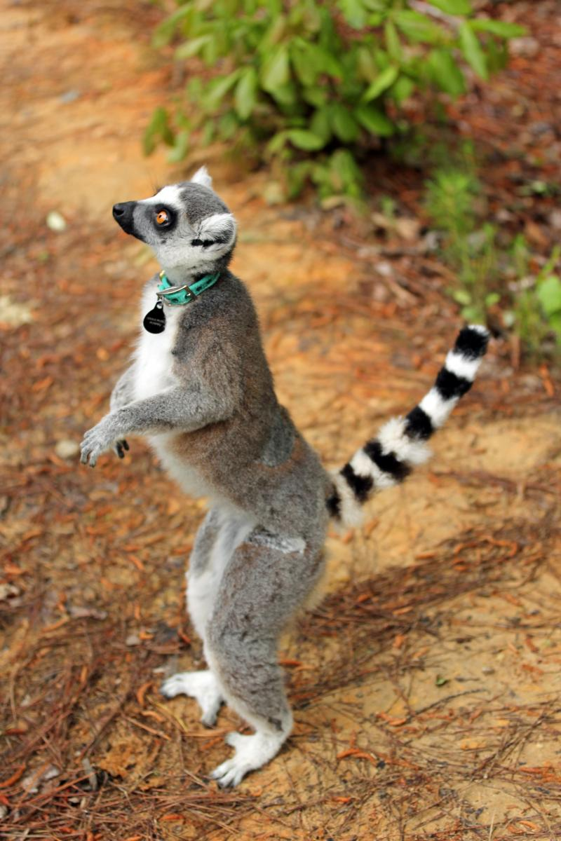 Duke Lemur Center