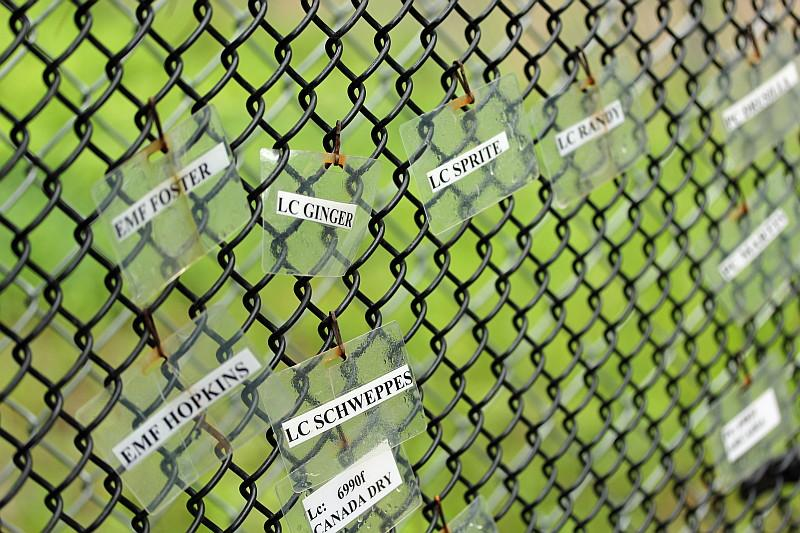 Name tags for lemurs at the Duke Lemur Center.