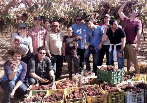 The group of bartenders picked two tons of grapes for a new batch of pisco. Anton is second from the right, in a black shirt.