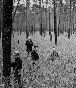 Hofmann Forest