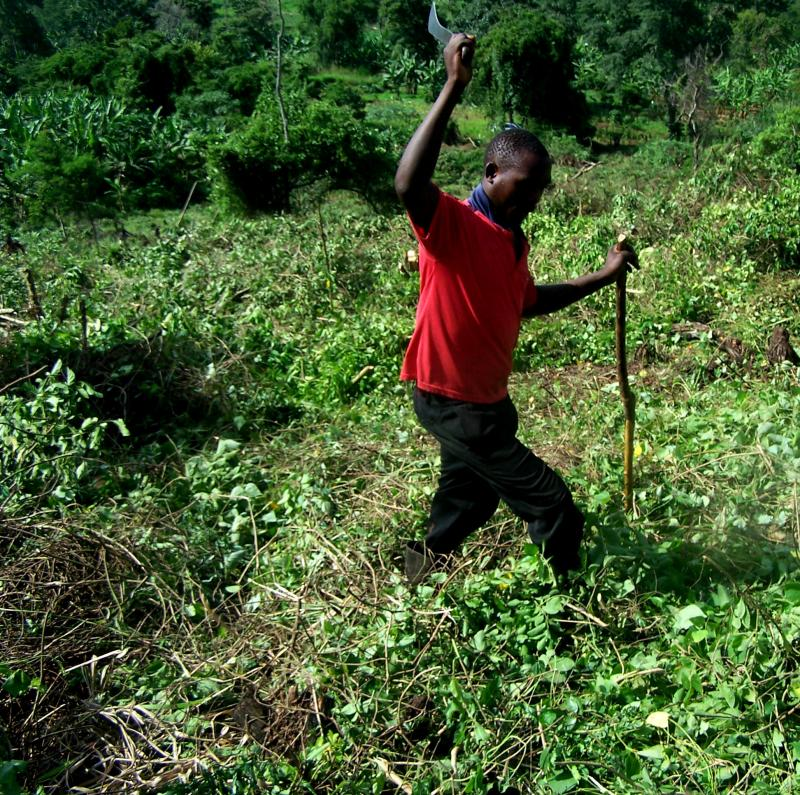 A man clears a field in Uganda with a machete, preparing it for apple trees.
