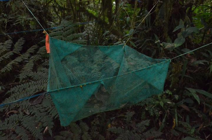 "Biologists collect forest ""litter"" -- leaves and seeds -- with nets."
