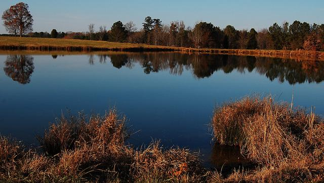 Photo: A farm in Lee County