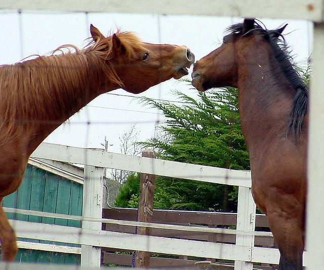 Two horses at play.