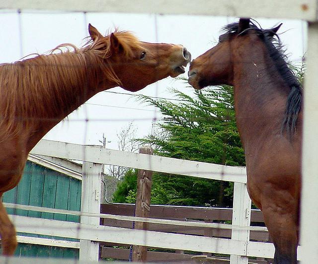 Two horses at play.